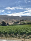 Vineyards, South Island